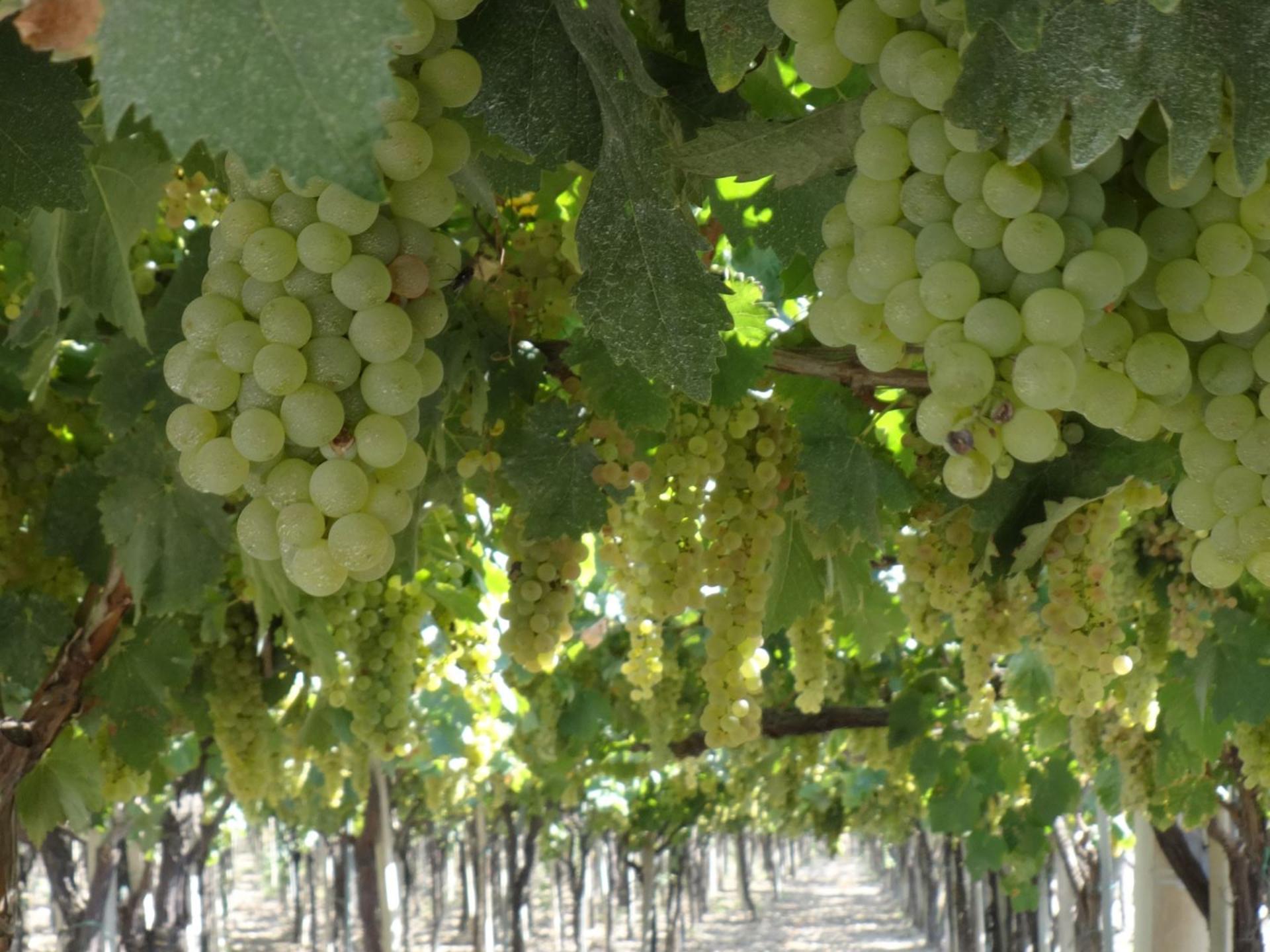 tuscany-vineyard-excursion-2