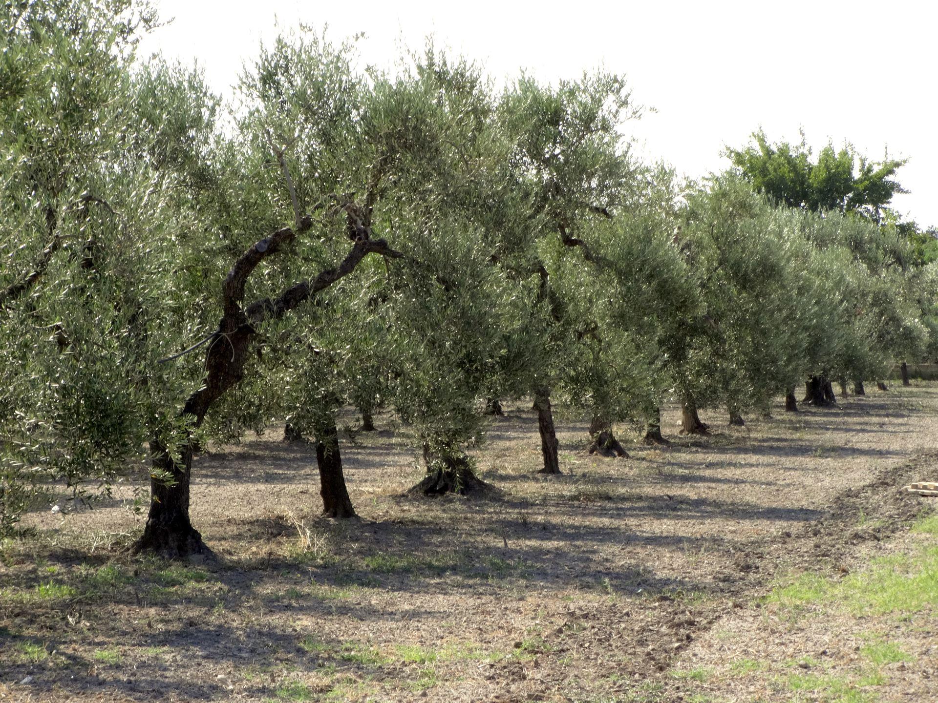 tuscany-vineyard-excursion-3